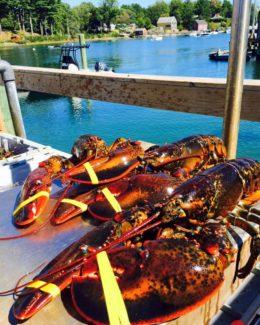 lobsters_water